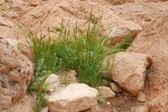 Es grünt in der Wüste