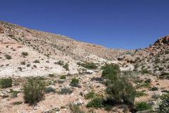 Die Wüste grünt