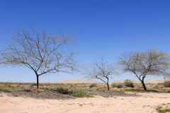 Kamelfarm